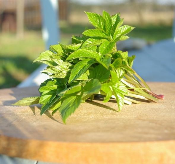 Рецепт: салат из сныти с тунцом и зеленым горошком