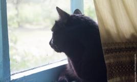Кошка на даче сидит на окне и следит за птицами