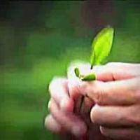 Embedded thumbnail for Как делают связанный чай