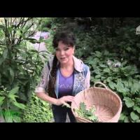 Embedded thumbnail for Какие растения полезные в хояйстве заготовить летом