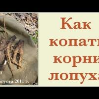 Embedded thumbnail for Как копать корни лопуха